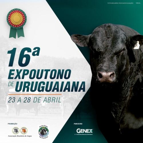 Angus recebe inscrições para 16ª Expoutono de Uruguaiana até sexta-feira (20/4)